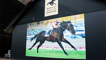 Black Caviar Champion