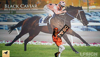 Black Caviar Wallskin